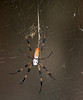 Prairie Lake - Golden-Silk Spider