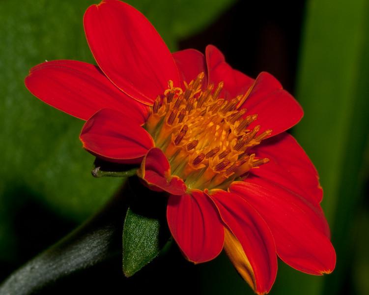 Butterfly World - Orange Sun Flower