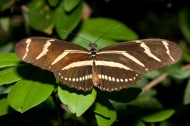 Butterfly World - Common Sergeant