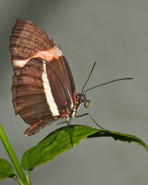 Butterfly World - Rosina Butterfly
