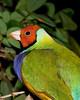 Butterfly World - Lady Gouldian Finch