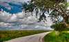 On the way to Lake Jackson in the 3 Lakes Area in Osceola County, Florida - Post HDR Processing