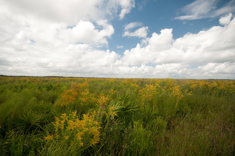 On the way to Lake Jackson in the 3 Lakes Area in Osceola County, Florida - Pre HDR