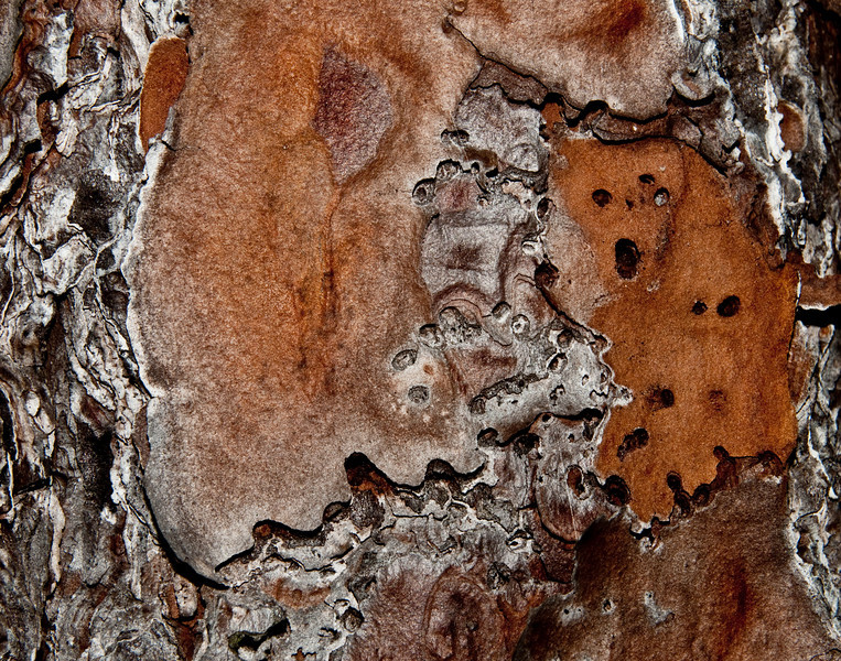 Three Lakes Wildlife Management Areas - Tree Bark