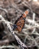 This photo was take around the tower off of Road 16 at Three Lakes (The Prairie Lakes Unit) - Monarch Butterfly