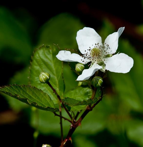 Nice looking white flower