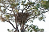 •  Rt 16 in Prairie Lake<br /> •  Bald Eagle nest