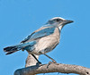 • Playalinda Beach<br /> • Florida Scrub-Jay