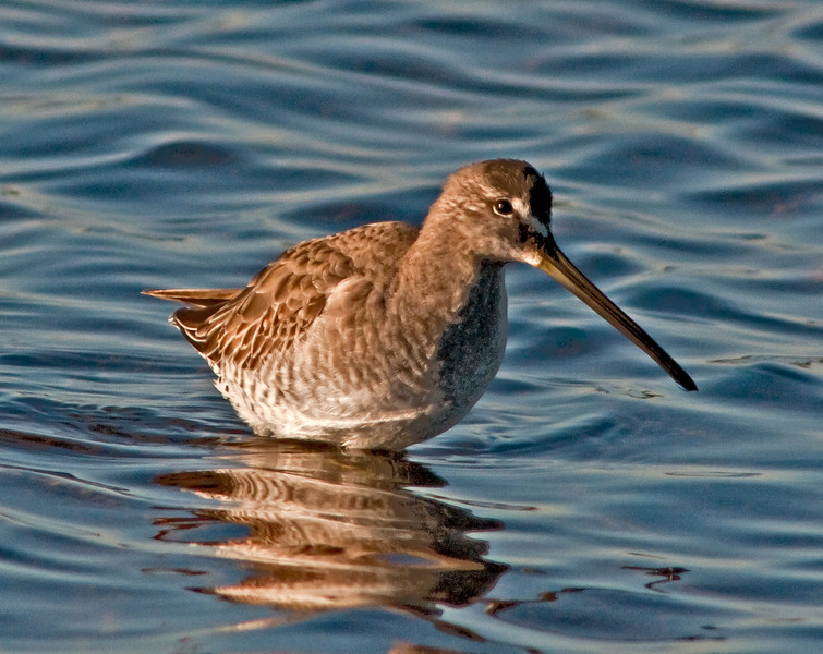 • Black Point Drive<br /> • Greater Yellowlegs