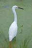 • Dan's Click Pond<br /> • Snowy Egret