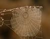 Moccasin Track Island Parking Area - Spiderweb