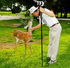 • Photographed by Ursula Dubrick<br /> • I think this 3 legged deer really likes Rob