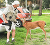 • Photographed by Ursula Dubrick<br /> • Arnold petting a 3 legged deer