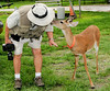 • Photographed by Ursula Dubrick<br /> • The 3 legged deer is giving Arnold a welcoming kiss