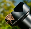 • Arnold's Butterfly Heaven<br /> • A pair of Silver Spotted Skipper moths on Harry's lens shade