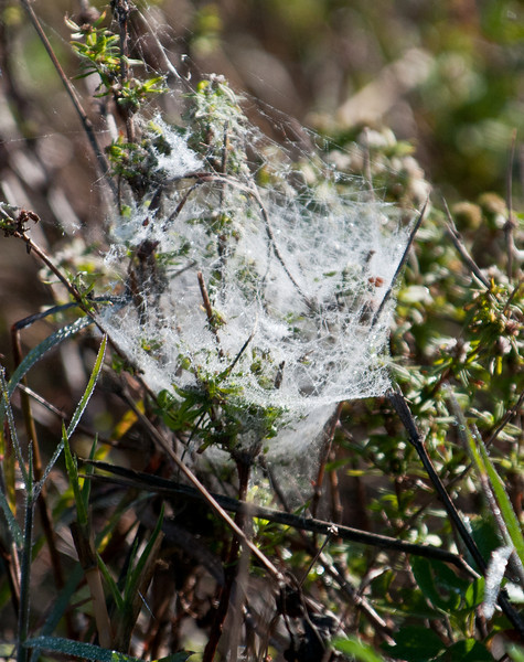 • A-R-M Loxahatchee National Wildlife Refuge<br /> • Spiderweb