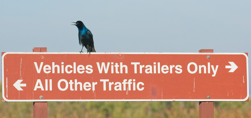 • A-R-M Loxahatchee National Wildlife Refuge<br /> • A Grackle making sure everybody is heading in the correct direction