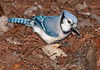 • Green Cay Nature Center<br /> • Blue Jay