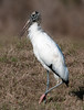 • Robert Amoruso Workshop<br /> • Wood Stork<br /> • Nikon D300S with a 70-200mm f2.8 lens