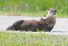 • River Otter<br /> • How about that Otter wave?