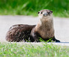 • River Otter<br /> • I can see you over there, so please keep your distance