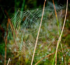 One of many hundreds spiderwebs I saw driving around the Wetlands.