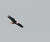 • This photo were taken with a Nikon D300 and Nikon manual focus 500mm lens<br /> • Bald Eagle in flight