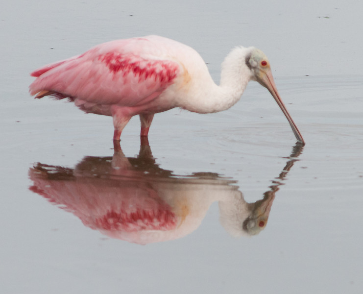 • This photo were taken with a Nikon D300 and Nikon manual focus 500mm lens<br /> • How about my reflection?