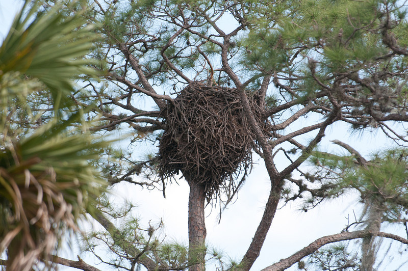 • Moccasin Island Tract<br /> • The second empty Eagle's nest going south