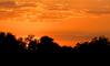 • Viera Wetlands<br /> • Sunset