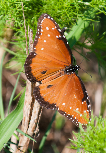 • Moccasin Island Tract<br /> • Queen Butterfly