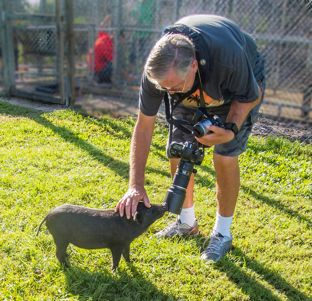 Ed is making friends with a small black pig