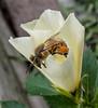 • Location - Winter Park<br /> • Honey Bee
