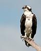 • Location - Viera Wetlands<br /> • Osprey- THe weather up here feels niiiiccceeeeeee!