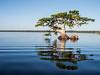 Joe Middelton's favorite Cypress Tree.  BTW - It's mine too.