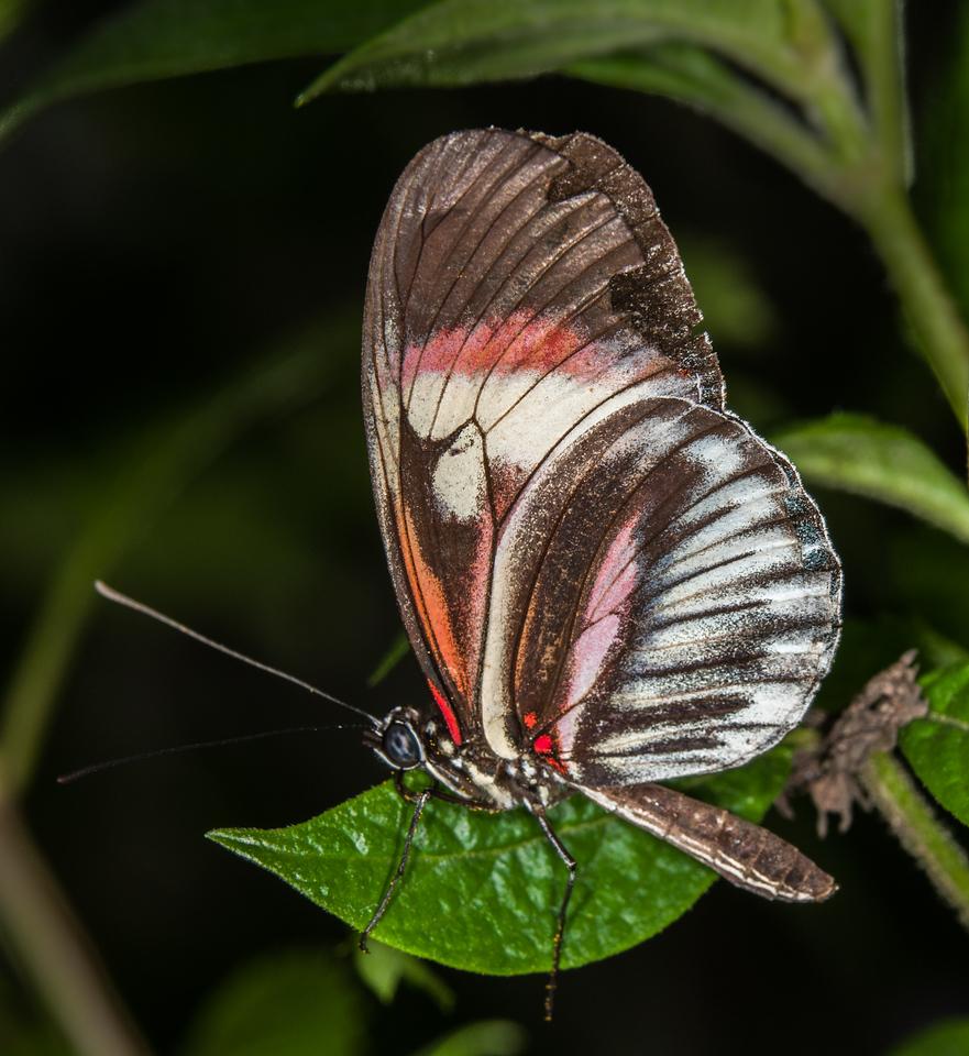 • Location - Butterfly World<br /> • Piano keys Butterfly