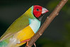 • Location - Butterfly World<br /> • Lady Gouldian Finch