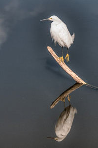 This actually a simulated HDR photo I did so I could show the details in the Snowy Egret and its reflection. Without doing the HDR processing, the Snowy Egret's body was all blown out.