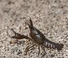 • Location - Fellsmere Rd in Kenansville<br /> • Crawfish