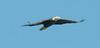 •Location - Joe Overstreet Landing<br /> • The eagle looks like Stealth Airplane