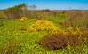 • Paynes Prairie Preserve State Park Lau Chau Trail<br /> • Scenic view
