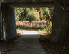 • Paynes Prairie Preserve State Park Lau Chau Trail<br /> • I used this small tunnel to help frame this photo
