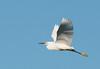 • Location - Stick Marsh<br /> • Snowy Egret