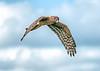 • Green Cay Wetlands<br /> • Northern Harrier Hawk