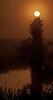 • Location - Viera Wetlands<br /> • Foggy sunrise