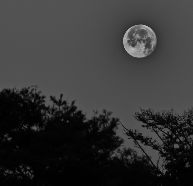 • Blue Cypress Lake<br /> • B&W of the full moon