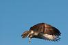 • Blue Cypress Lake<br /> • Okay where's the Osprey's head?