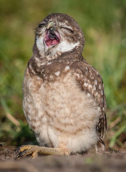 What a big yawn!