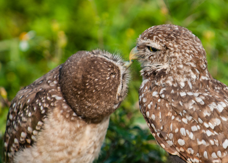 Can we play the beak to beak game mom?