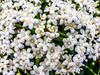 • Gatorland - Swamp Walk<br /> • Elderberry flowers with tiny water droplets